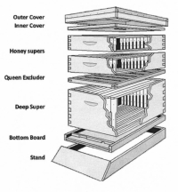 ashe county beekeepers association glossary. Black Bedroom Furniture Sets. Home Design Ideas
